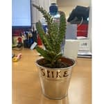 MDE Health & Wellbeing Initiative - Individual Desk plants 3
